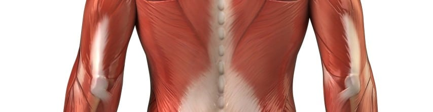 Rückenübungen - mittlerer Rücken