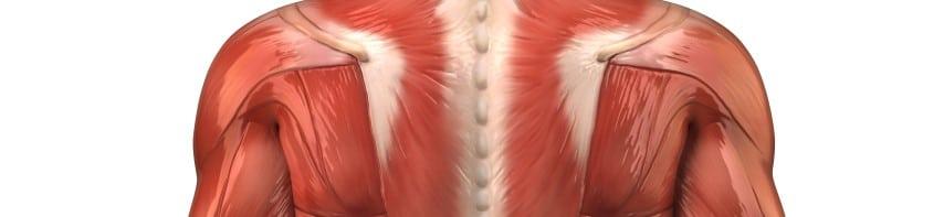 Rückenübungen - oberer Rücken