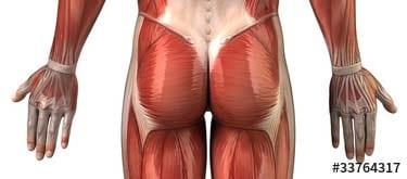 Rückenschmerzen im unteren Rücken - Rücken-Komplett